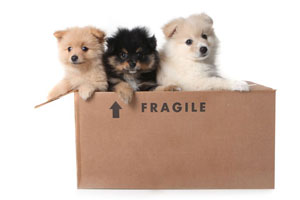 Dogs in a Box marked Fragile