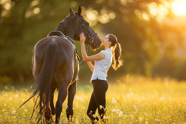 Insights from AAEP 2018 (American Association of Equine Practitioners Conference)